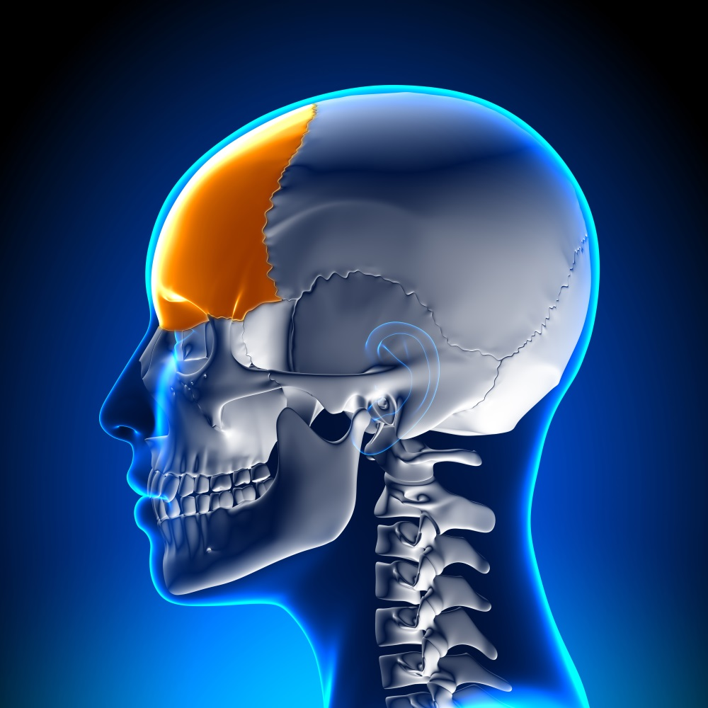 Female Frontal Bone